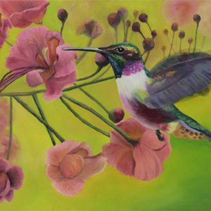 Humming Bird 2 - Kim Hogan Fine Art