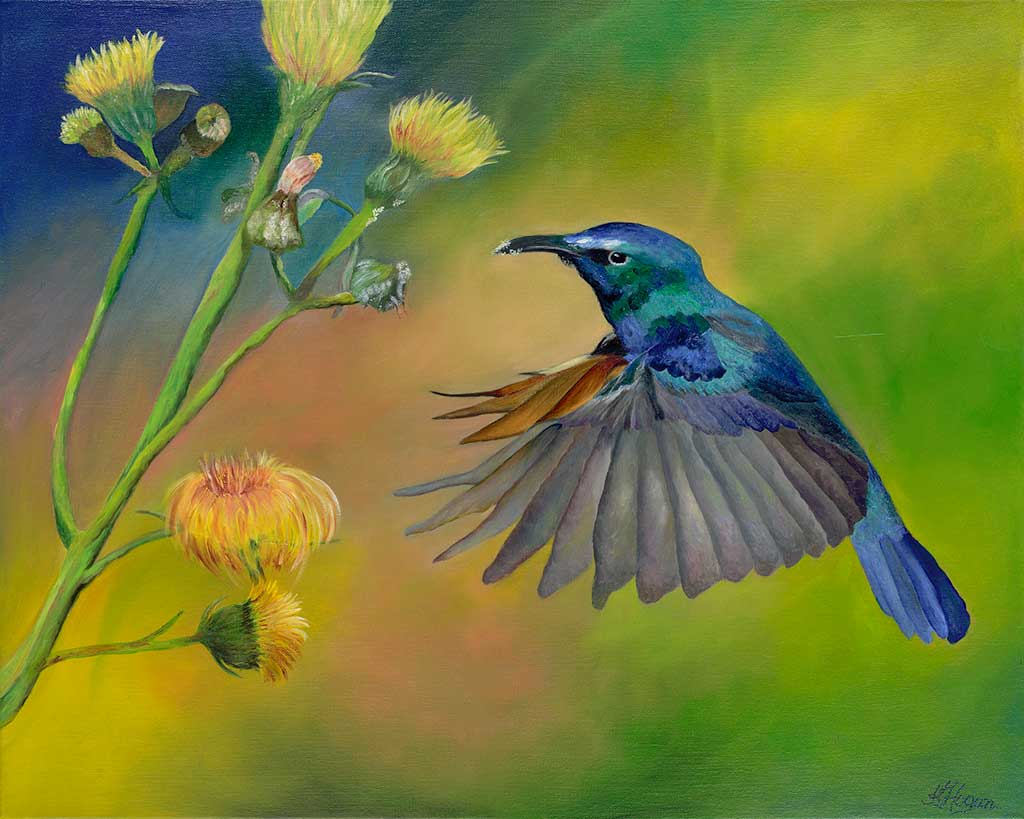 Humming Bird 3 - Kim Hogan Fine Art