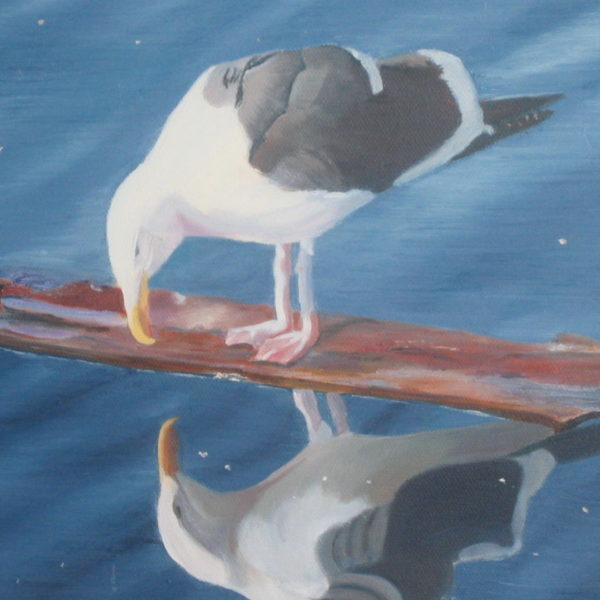 Seagull's Reflection - Kim Hogan Fine Art